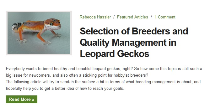 geckotime article2