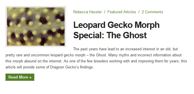 geckotime article3